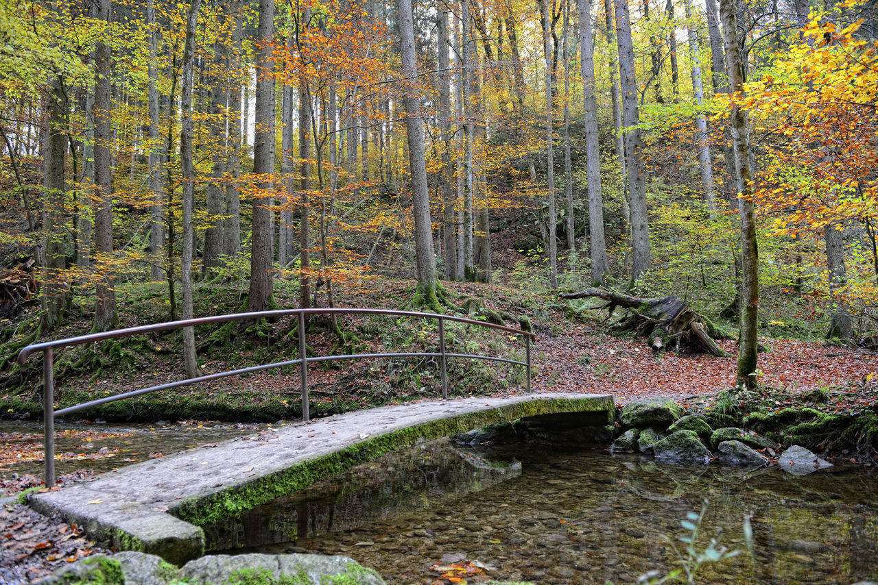 tree, forest, nature, tranquil scene, scenics, autumn, water, no people, lush foliage, outdoors, tranquility, beauty in nature, landscape, woodland, idyllic, stream - flowing water, river, moss, day, deciduous tree, wilderness area