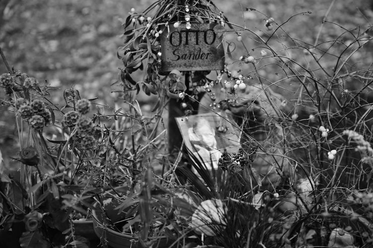 Berlin Day Friedhof No People Otto Sander Outdoors Text