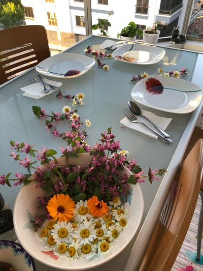 Flower Flowering Plant Plant Freshness High Angle View Table Nature