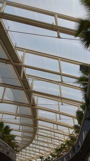 "Palms and urban geometry. "" Palms Urban Geometry Greenhouse Skylight Ceiling Architecture And Art Directly Below Architectural Design Architectural Detail Architectural Feature Roof Beam Pattern Cupola"