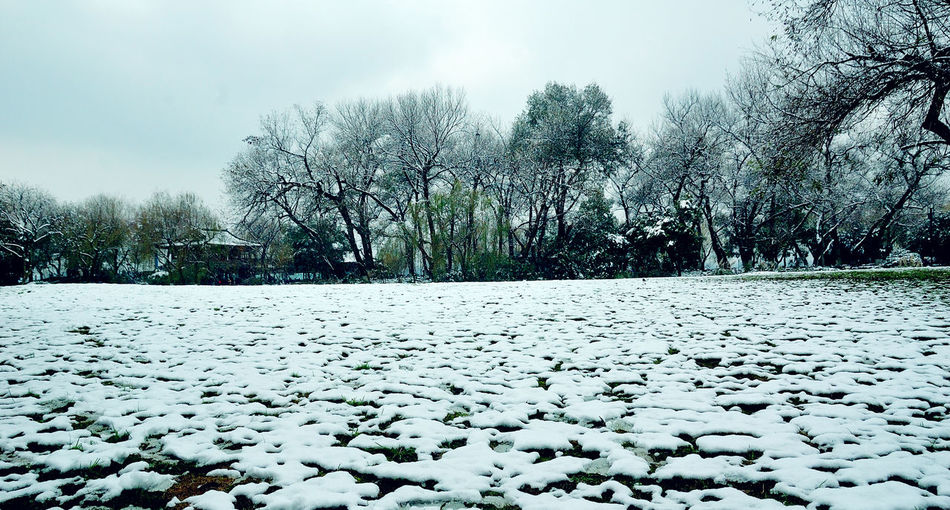 Snow covered plants on field against sky