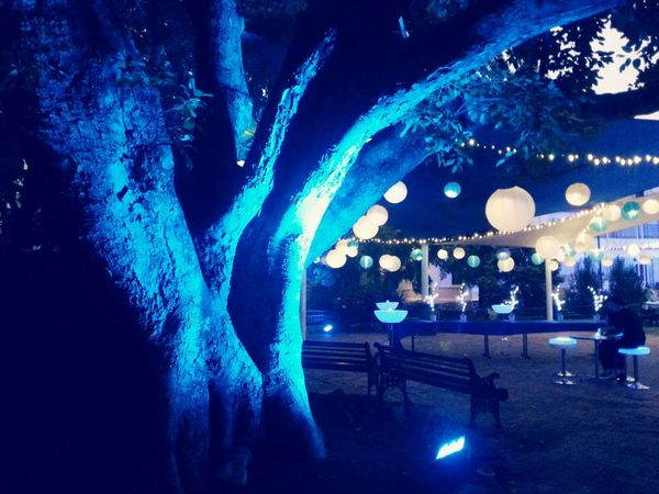 Lovely Ambience at a recent Gig Venue . Lanterns Tree Blue Wave Showcase: April 2016 Cities At Night