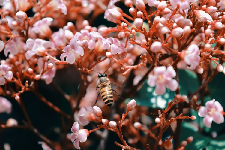 Close-Up Of Insect Perching On Fresh Flowers