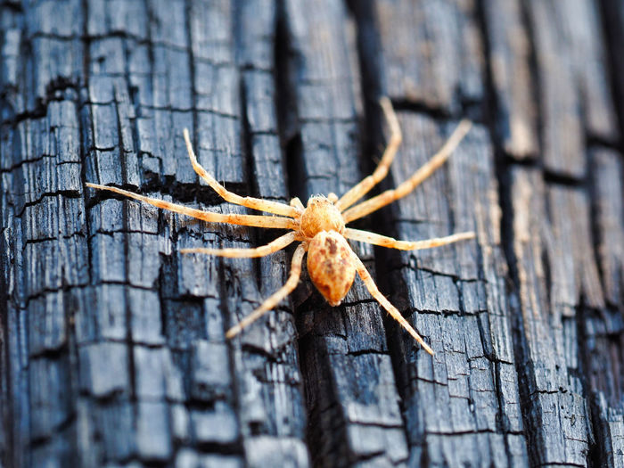 Close-up of spider on wood