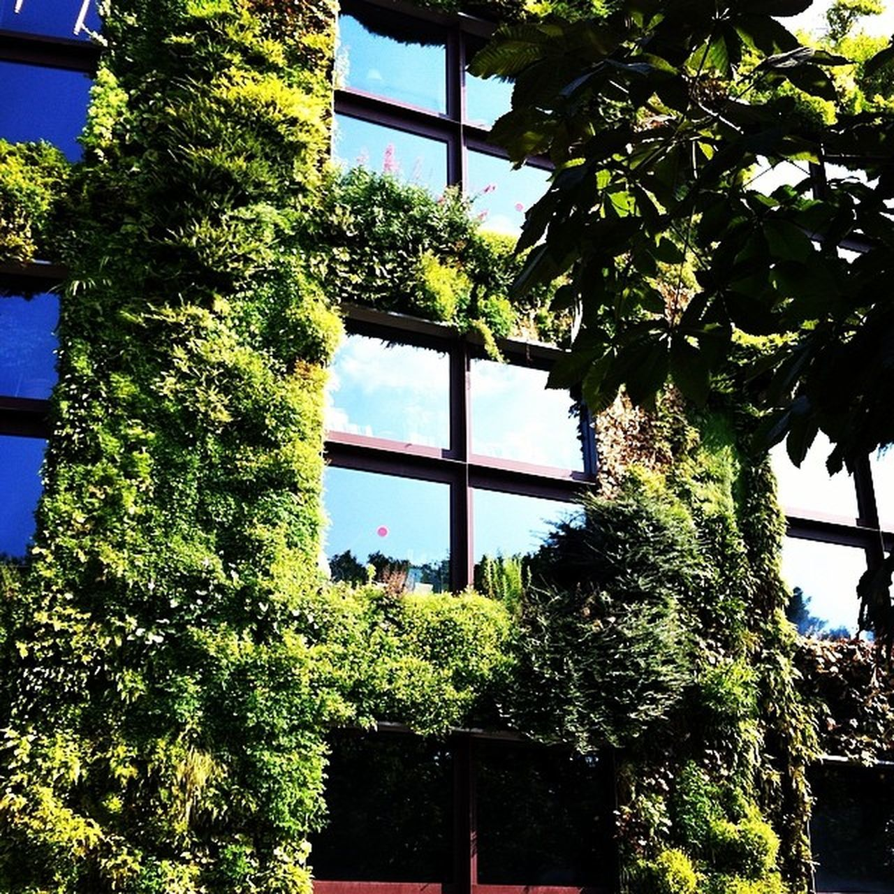 tree, growth, window, low angle view, plant, ivy, green color, day, nature, no people, built structure, architecture, branch, outdoors, leaf, sky, beauty in nature, building exterior, close-up