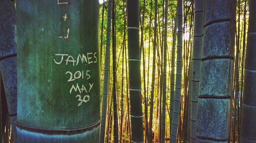 Just to be clear, this wasn't my doing. It was James 'May' 30th's fault, you bamboo-wrecking hippie.. Convenientthough Fushimiinari Kyoto Japan
