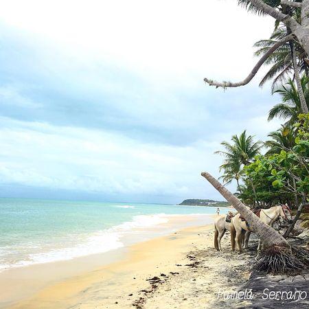Praia Bahia Playa Beach Hourse Natureza Naturaleza Caballos Cavalo Sea