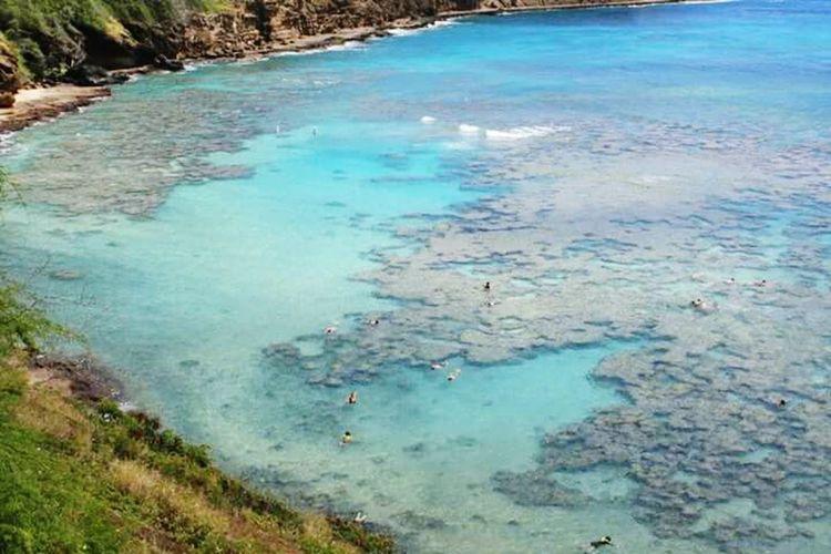 🐟🐠🌊Hanauma Bay Hawaii Coralreef