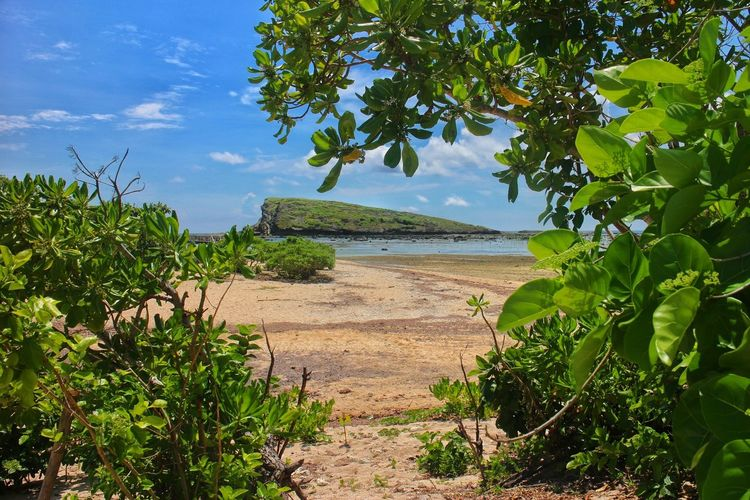 in the way to Biri island, rock formations Tree Nature Sky Water Cloud - Sky Outdoors Landscape No People Beauty In Nature Biri Biri Island Biri Island Philippines Philippines Northern Samar