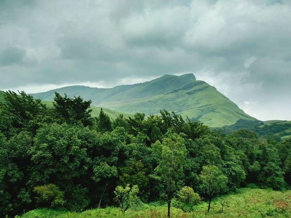 Colour Of Life Kudremukh Kudremukh Peak Trekking Trek Mountains Trees Trees And Sky Green