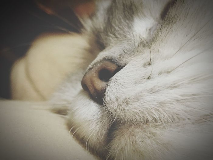 Toffy Pets Animal Themes Relaxation Sleeping Photo By IPhone7plus Cat ♡