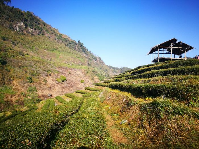 Nature Plant Landscape Outdoors Chiang Mai   Thailand Green Color Thailand Mountain Range Nature Beauty In Nature