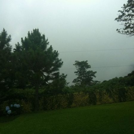 Mist Chilly Noon Walking Around