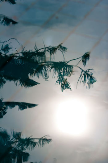 Nature Plant Growth Tree Sky No People Beauty In Nature Leaf Branch Day Tranquility Plant Part Outdoors Sunlight Cloud - Sky Selective Focus Tropical Climate Low Angle View Reflection Reflection On Water Iran Mazandaran Iran Ramsar Canon20d Autumn