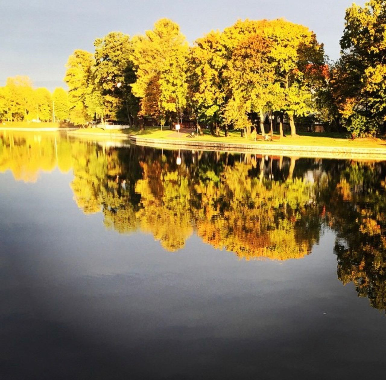 reflection, tree, water, plant, lake, waterfront, tranquility, beauty in nature, nature, tranquil scene, symmetry, scenics - nature, no people, autumn, day, growth, idyllic, outdoors, sky, change, reflection lake