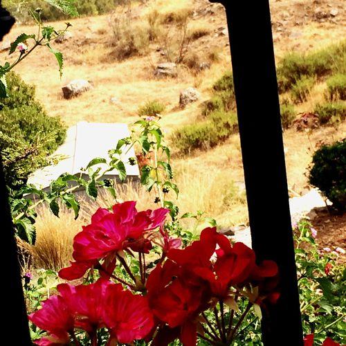 Through The Railings Campo Spain