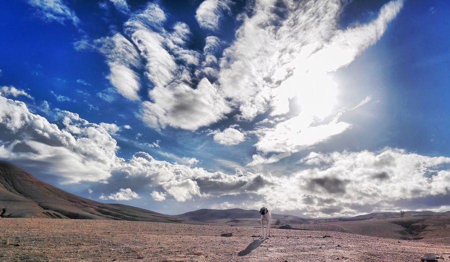 Desert Dog Sky