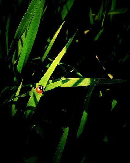 bug Bug Nature Green Insect Ladybug Ladybird Damselfly Beetle Grassland Tiny