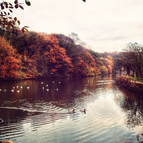 Peaceful Saturdays ..... Water_collection Colors Of Autumn EyeEm Best Shots - Trees