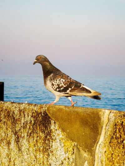 View of seagull perching on a sea
