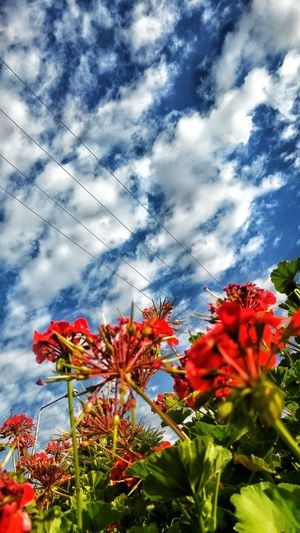 Flower Sky Nature Beauty In Nature Red Day Morning Morning Sky Morningwalk Plant Flower Head Butiful Nature Butiful Flower Butiful Day Butiful Sky Amazing Nature Wonderful Beauiful No People
