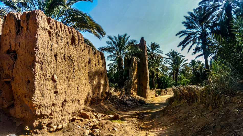 Morocco Africa Date Palms Day Dirt Road Environment Land Nature No People Outdoors Plant Ruins Architecture Sky Sunlight Tranquil Scene Tranquility Tree