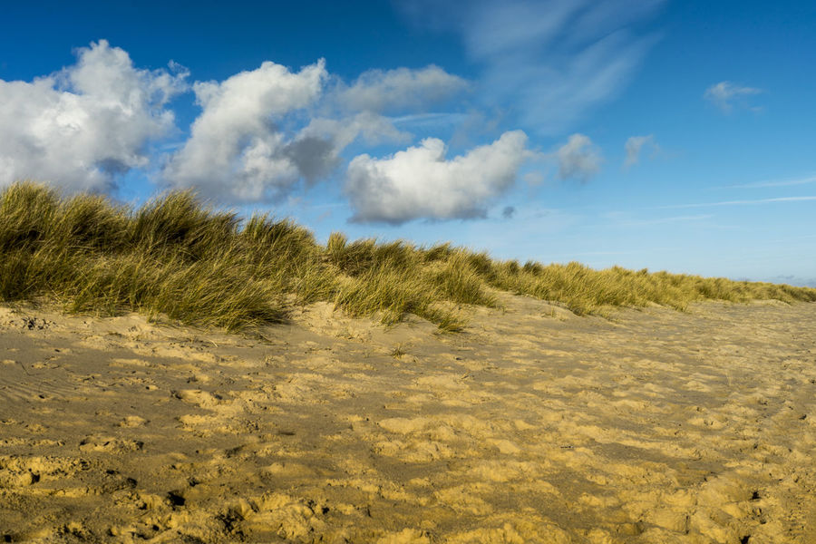 Sand Dunes at Studland Beach, Dorset, UK Beach Beauty In Nature Cloud - Sky Day Grass Growth Landscape Marram Grass Nature No People Outdoors Plant Sand Sand Dune Scenics Sky Studlandbay Tranquil Scene Tranquility