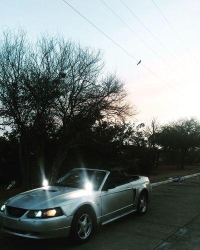 Mustang Mazatlan Motor Vehicle Tree Sky Road Nature First Eyeem Photo