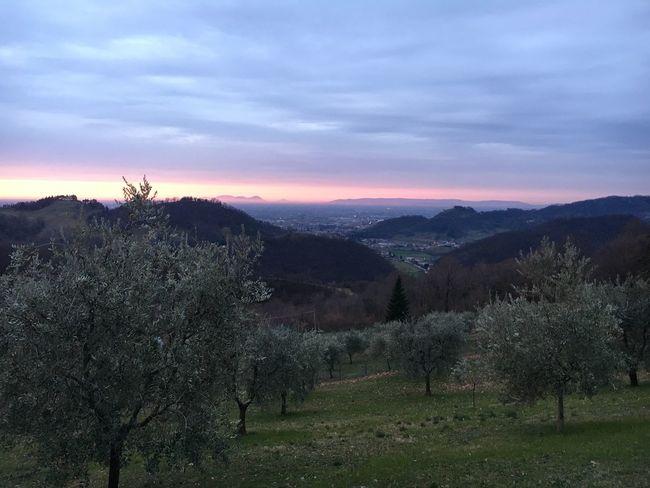 Ravano panorama. 5 february 2018 Beauty In Nature Tree Tranquility Nature Scenics Tranquil Scene Field