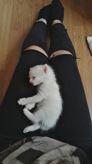 My baby😺😻 Kedicik 🐈 Angoracat A Reason To Love A Reason To Smile :) Turkish Kitten MyGIRL Howcute Adoreable Angora Den Haag Kedi One Animal Pets Domestic Animals Indoors  Close-up Mammal Person Looking At Camera Relaxation Domestic Cat Animal Hair Zoology Animal Nose