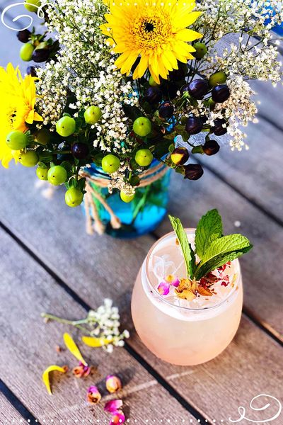 The Pink Rose San Diego Coffee Shop Kombucha Rosé Plant Flower Flowering Plant Growth Table Nature