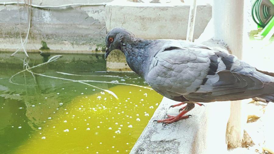 Water One Animal Animal Themes Day Washing Cleaning Bird