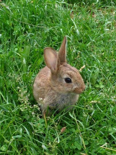 Vie de lapin