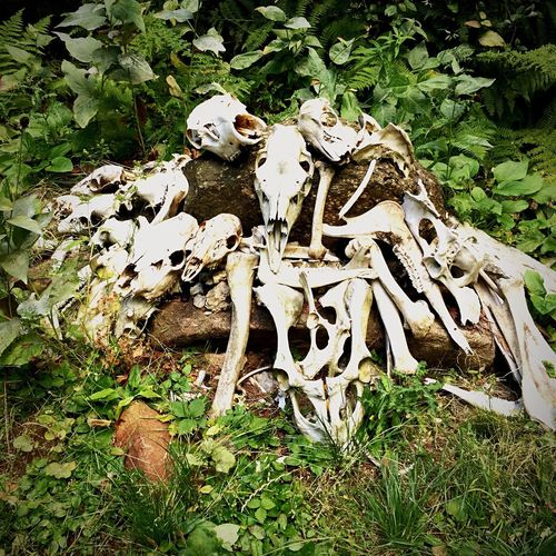 Stack of skulls Outdoors Bones And Grass Animal Head  Nature Naturephotography Nature Inner Power