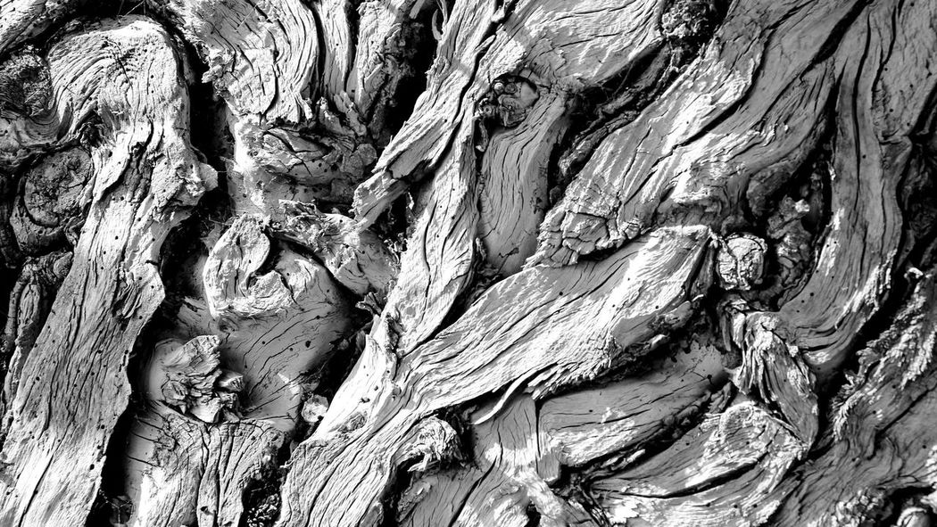 Backgrounds Bark Close-up Cracked Day Full Frame Geology Growth Ivy Knotted Wood Nature No People Outdoors Pattern Pruned Rough Textured  Tree Tree Trunk Wood - Material Wood Grain