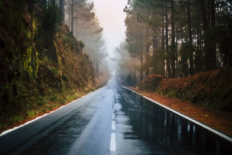 Long way road in the mountain with forest trees wood around and fog or clouds at the end like fog bad weather - rain on the asphalt and dirty ground - winter autumn climate - travel and destination Direction The Way Forward Road Transportation Tree Plant No People Diminishing Perspective Nature Day Beauty In Nature Water Scenics - Nature Tranquility Outdoors Symbol Tranquil Scene vanishing point Non-urban Scene Sign Long Dividing Line Forest Pines El Teide National Parc Tenerife Raining Fog Cloud - Sky Asphalt Dirty Winter Autumn Climate Travel Destination Driving Vacations Journey Suggestive Natural Condition