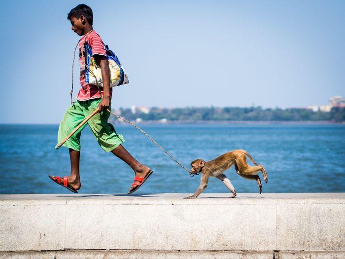 The Journey Is The Destination On The Way Monkey Kid Fun Run Mumbai Madari India Streetphotography Photography Travelling Commuting Moments Green Life
