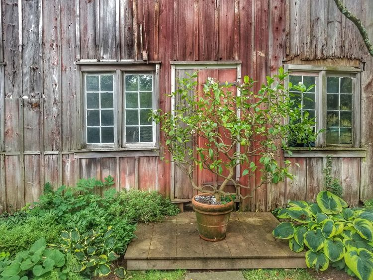 #barn Window Box Leaf Window Ivy Door House Potted Plant Architecture Building Exterior Built Structure Closed Door
