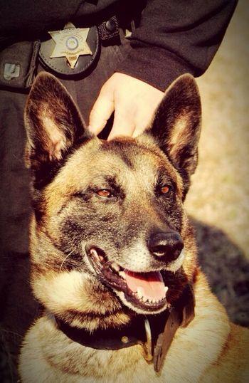 Deputy Ozzy... R.I.P. Enjoying Life Pets Police