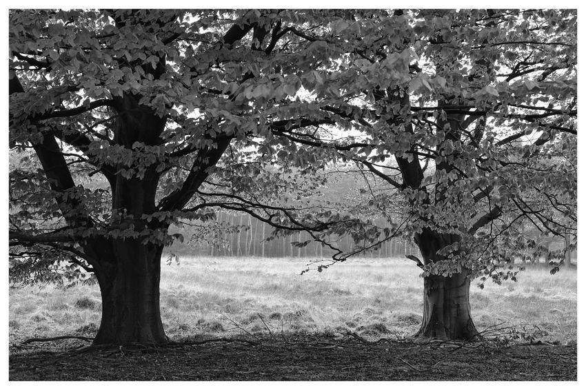 Trees Nature Nature Photography Blackandwhite Blackandwhite Photography Blackandwhitephotography Black And White Black And White Photography EyeEm Best Shots - Black + White Tree