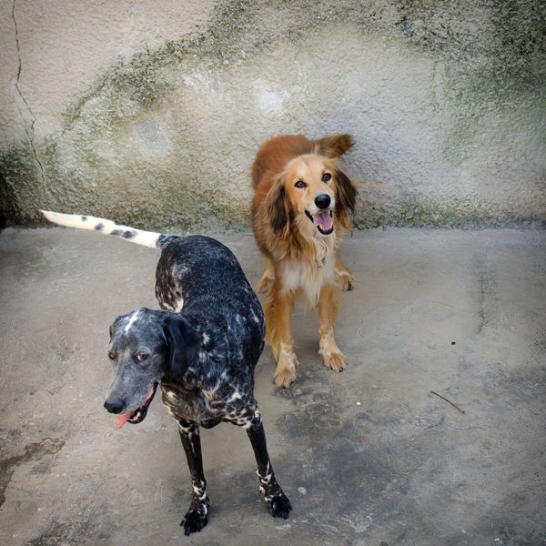 Dog portrait Looking At Camera Mongrel Standing Animal Themes Day Dog Domestic Animals Mammal Mix Breed Mix Breed Dog Multibreed No People Pets Smiling Togetherness Two Two Dogs