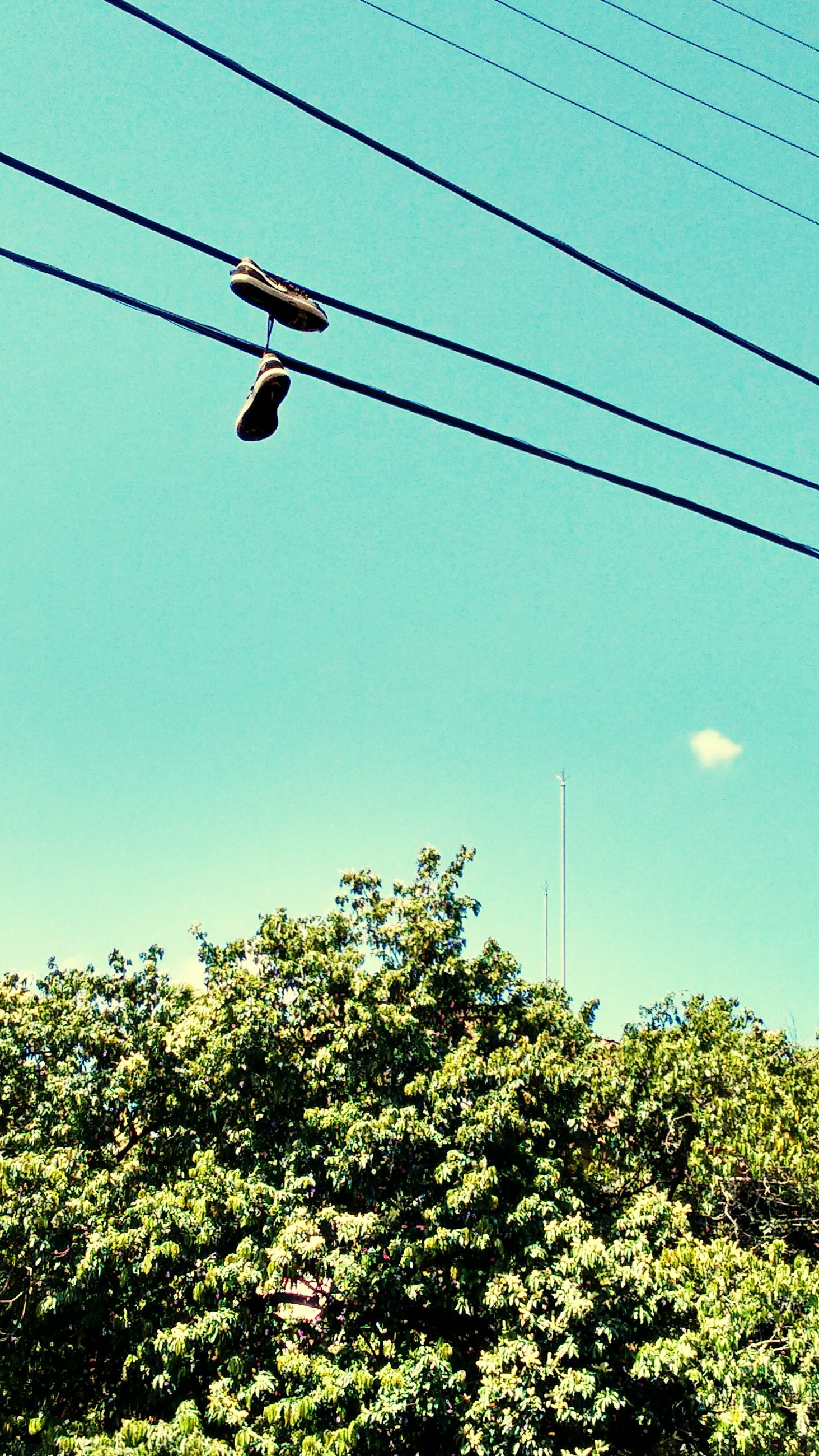 power line, low angle view, cable, electricity, electricity pylon, power supply, clear sky, tree, power cable, fuel and power generation, street light, connection, technology, sky, blue, lighting equipment, growth, day, green color, transportation
