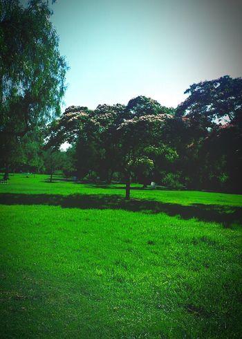 Trees Beautiful Day Grass Green
