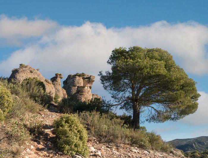Trees growing on rock against sky