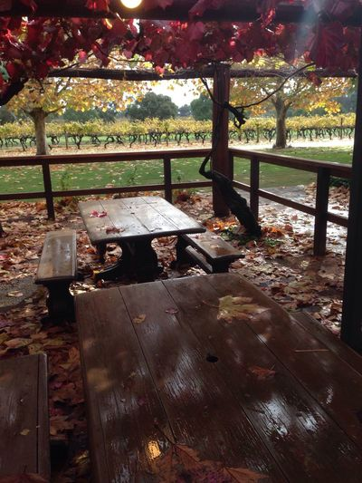 Romantic Winery Wine Vineyard Love Red Maple Autumn Fall Beauty Fall Colors Nature_perfection Nature EyeEm Best Shots Eye4photography  EyeEm Gallery EyeEm Best Edits Pic Tree Rain Rainy Days Sunshine After The Rain