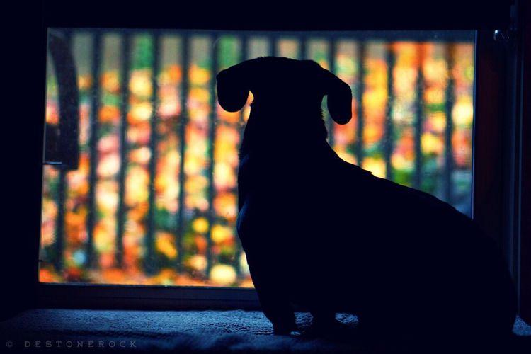 Mydogiscoolerthanyourkids Dog I Love My Dog Animals Mybuddy Friends Dreaming Watchingforsquirrls