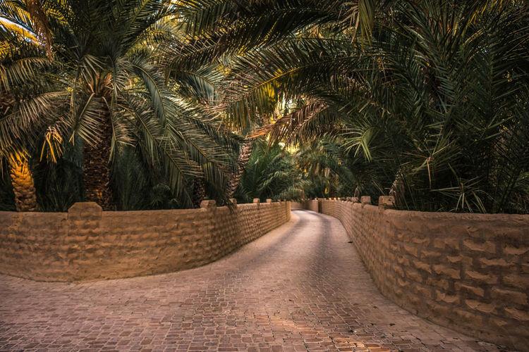 path through palms Tree Palm Tree Sand Sky Landscape