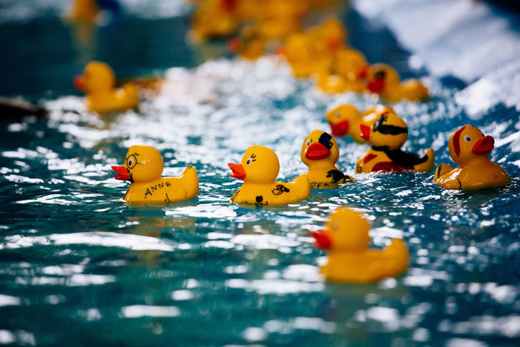 Close-up of yellow toy ducks floating on water
