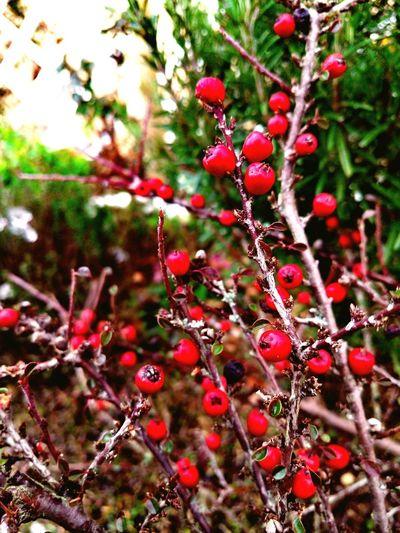 RED Red Nature Natural Taking Photos Enjoying Life Taking Pictures Beautiful Nature Beautiful Garden France