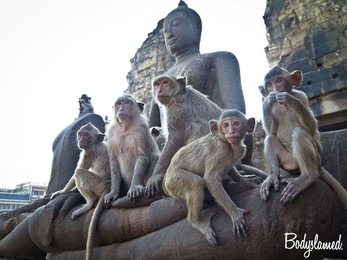 PhraPrangSamYod:Lopburi,Thailand. Lopburi Travel Photography Thailand Amazing Thailand